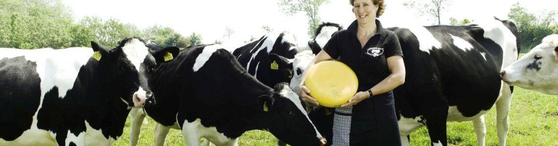 De koeien van Kaasboerderij Schellach zijn gelukkig.
